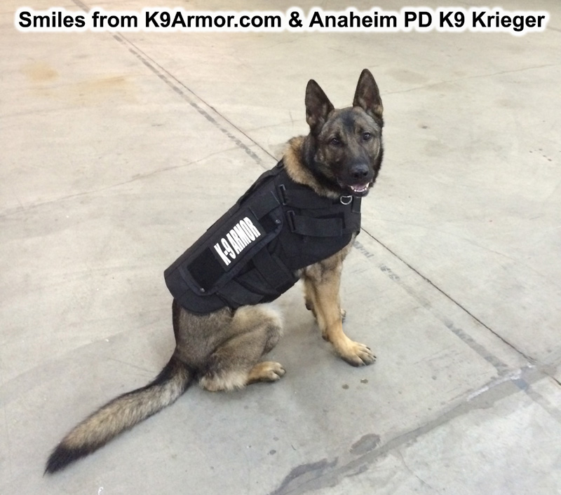 Anaheim PD K9 Krieger, photo by Officer Dale Miller.