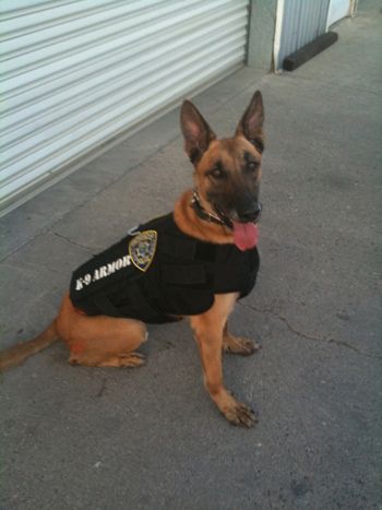 Click to see large image of Sabre, Richmond PD  K-9 Armor dog number 20