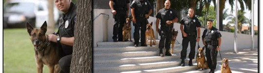 Click here to visit the Santa Ana Police Foundation on Facebook